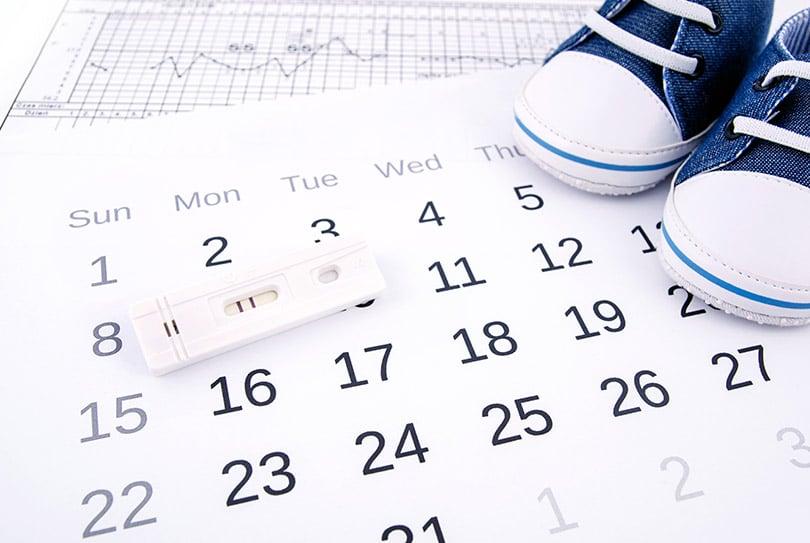 ¿Cómo calcular mis días fértiles para quedarme embarazada?