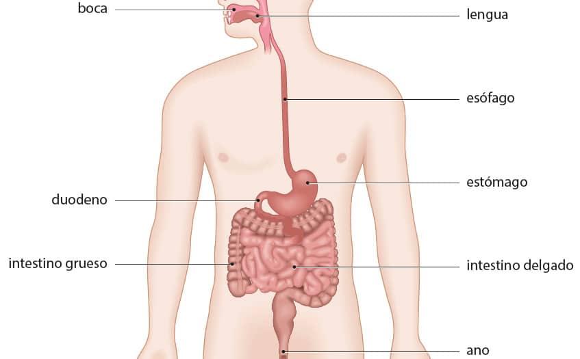 cuales son los sintomas gastritis