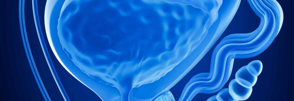 funcion de la prostata del hombre